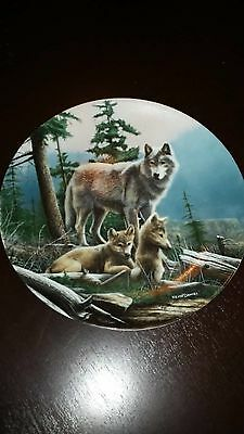 """""""first Outing"""" Wolf, Wolves Collector Plate-Kevin Daniel-Call Of The Wilderness"""