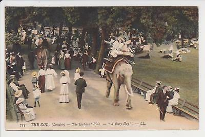 Pc London Zoo The Elephant Ride By Ll C 1910