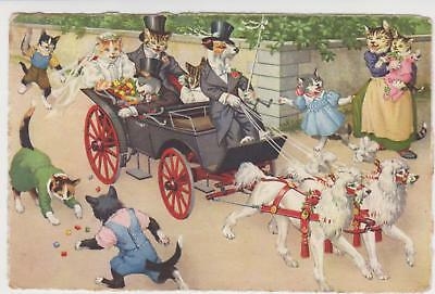 PC , DOGS AND  CATS  ANTHROPOMORPHIC  CAT POSTCARD Max Kunzli C 1950