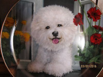 Danbury Mint BICHON FRISE A Perfect View Limited Edition Plate