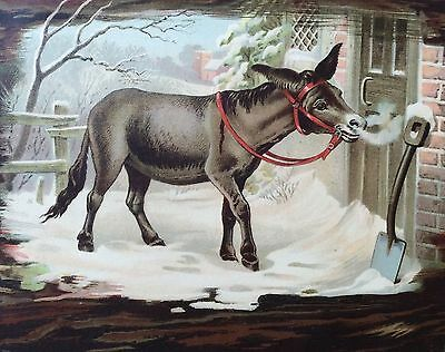Large Victorian Advertising Card: Donkey In Snow