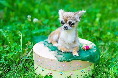 Felted miniature of Chihuahua doggie ❤❤❤ :-)  by Yana Fedorova