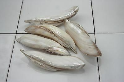Pearl Banana Twist (x2) Mother of Peal Sea Shell - Shell Craft Natural Home Deco