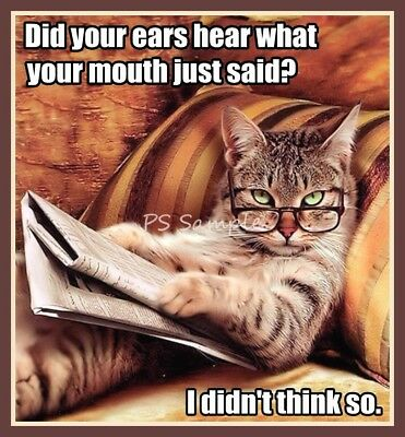 CAT Did Your Ears Hear Funny Magnet 3.5 x 3.25 inches