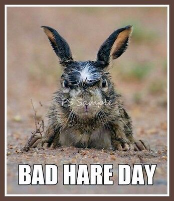 Bad HARE Day Funny Magnet 3.25 x 3.75 inches