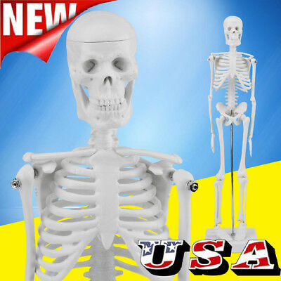 45CM Fexible Part Human Anatomical Skeleton Medical Model with Stand for School