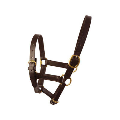 JHL Leather Foal Headcollar