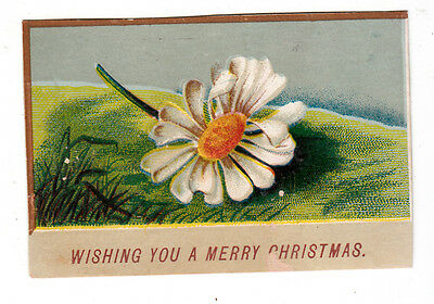 Wishing You a Merry Christmas Daisy on a Hill Vict Card c1880s