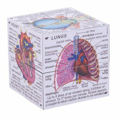 ZooBooKo Scientific Human Body Cube Book Systems Statistics Educational Kids New