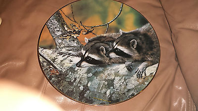 """""""fascination"""" By Carl Brenders - Raccoons Plate- """"our Woodland Friends"""