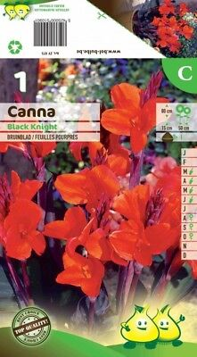 Bulbe Canna Black Knight Feuilles Pourpres X1
