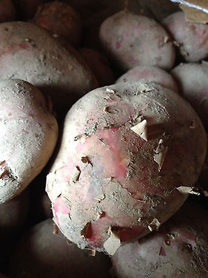Red Potatoes from  Cornwall new seasons freshly dug.