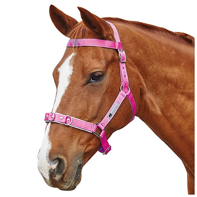 Kincade Brights Nylon Padded Lunge Cavesson - Hot Pink: Full