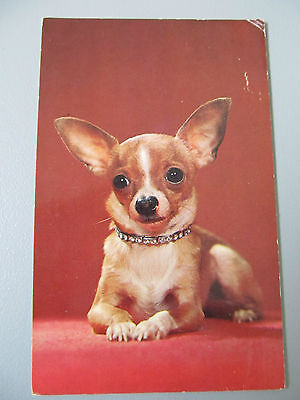 1962 Vintage postcard - CHIHUAHUA - Colour Photo used