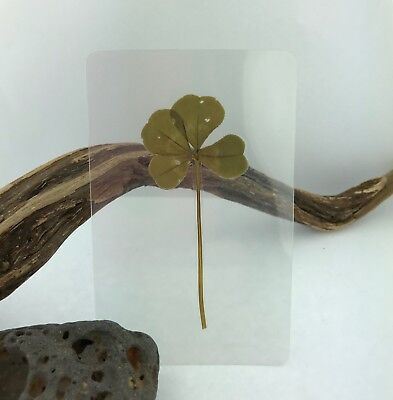Real Genuine Four 4 Leaf Clover Laminated Lucky Charm Gift Bookmark PLEASE NOTE