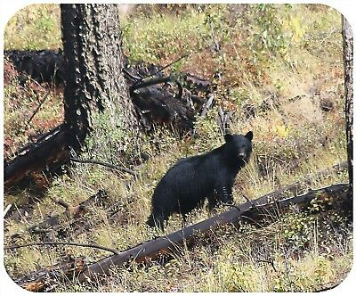 Mouse Pad Custom Thick Mousepad-Black Bear In Yellowstone Np - With Any Text