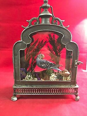 *Antique Victorian Style Taxidermy Violet Parakeet Bird in Lighted Display Case