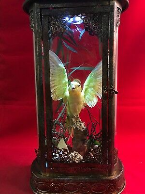*Antique Victorian Style Taxidermy Ylw/grn  Parakeet/Budgie Bird Lighted Display