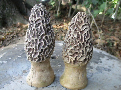 Pair Of Adorable Life Like Small Morels Vintage Cement/concrete Garden Statues