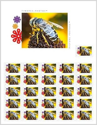 BEE, WASP, Close Up _PRE-ORDER_ Picture Postage Stamp SHEET Canada 2017 po34c