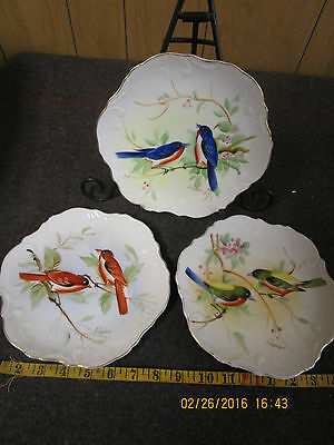 lot of three vintage collector plates with hand painted birds signed by artist