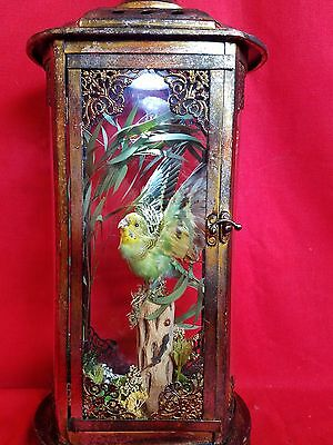 *Antique Victorian Style Taxidermy Green Parakeet/Budgie Bird Lighted Display