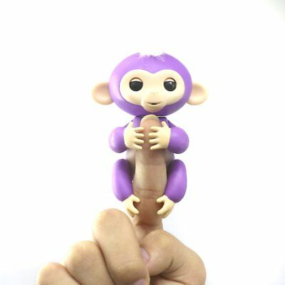 how to get a finger monkey as a pet