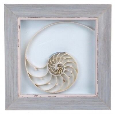 Framed Chambered Nautilus Shell Center  Cut - Natural Sea Shell
