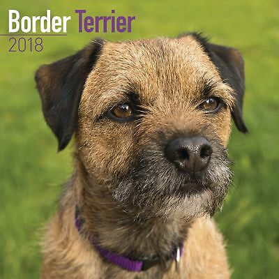 Border Terrier Official 2018 Square Wall Calendar