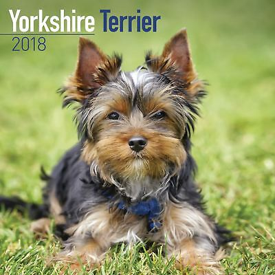 Yorkshire Terrier Official 2018 Square Wall Calendar