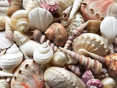 SHELLS MIX 500 Gr ( 2-6 cm) Pearl, Red, White, Brown for home/wedding decoration