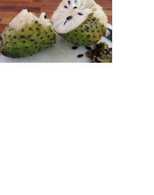 12 seeds sweet soursop fruit