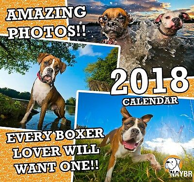 notts and yorkshire boxer rescue charity calendar 2018