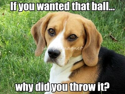 "BEAGLE Ball 4"" x 3"" Fridge Magnet"