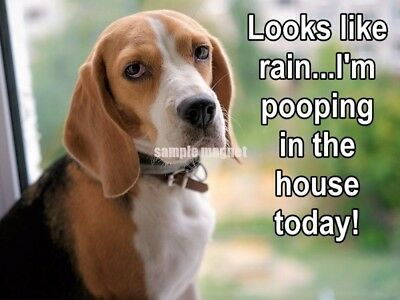 "BEAGLE Poop in the House 4"" x 3""  Fridge Magnet"