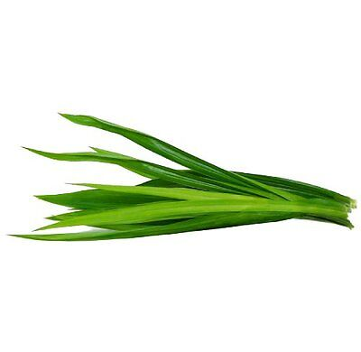 Siam Grocery UK Fresh Green Thai PANDAN (Pandanus Leaf) Leaves 200g - ใบเตย