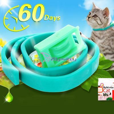 Anti-insect Anti Flea Pet Dogs Cat Collar Insecticidal Adjustable Ring Neck Y#BU