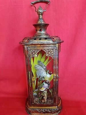 *Antique Victorian Style Taxidermy Gouldian Finch Pair Bird Lighted Display