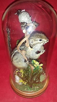 SALE*Antique Victorian Inspired Taxidermy Chipmunk Glass Dome Display/squirrel
