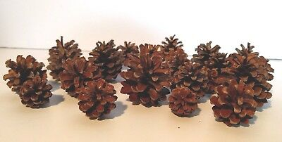 """Small Pine Cone Pinecone 25 Round Fat Natural 1"""" 2"""" 3"""" for Wreath Craft Holiday"""