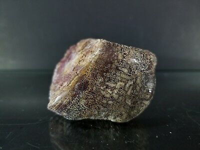 polished dinosaur bone