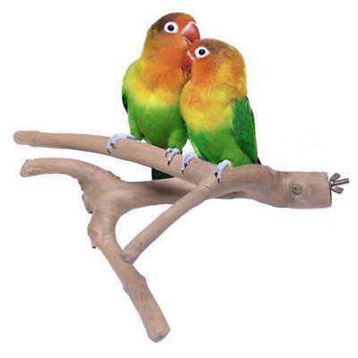 Java Wood Multi Branch Bird Perch: Natural Hardwood Parrot Perches 5 Sizes