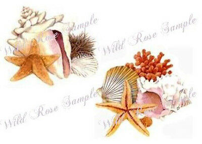 SeaSHeLLs & STaRFiSh ShaBby WaTerSLiDe DeCALs