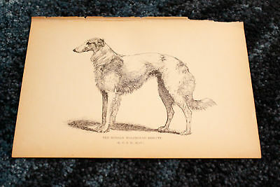 """Antique 1892 Dog Show Champion RUSSIAN WOLFHOUND """"KRILUTT"""" Plate Print Engraving"""