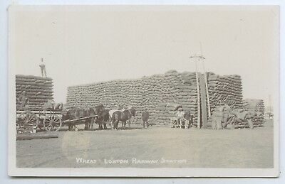 1910 Rp Npu Postcard Wheat Stacks Loxton Rail Station Sa Roberts Scarce Phot T61