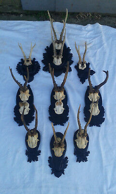 13 pieces Roe Deer Buck on 9 pieces Antique Vintage Wood Carved Black Forest Pla