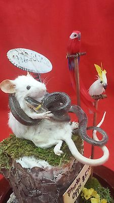 SALE*Taxidermy Mouse & snake Photo/picture dude & Faux Parrots-anthropomorphic