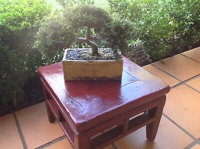 Antique Chinese Oriental Stool Asian Style Side Table Plant Stand Rozelle