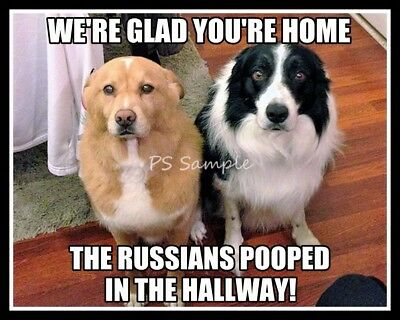 BORDER COLLIE Pooped in the Hallway Funny Magnet 3.75 x 3 inches