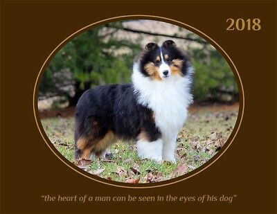 2018 Shetland Sheepdog/sheltie Calendar - Everyone'S Favorite!!!